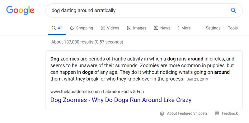 dog darting around eratically