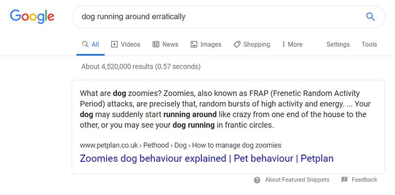 dog running around frantically