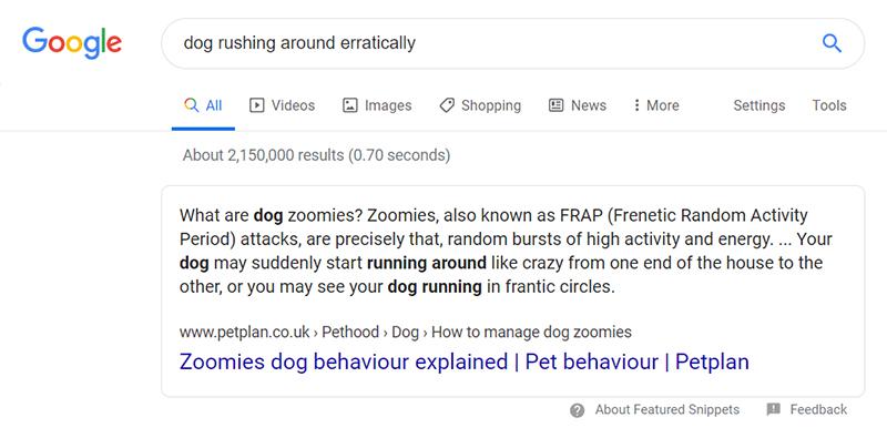 dog rushing around erratically